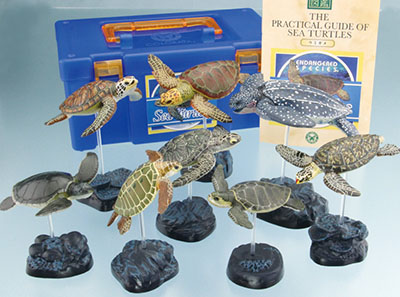 fgr_seaturtleks.jpg