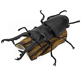 09_tr_sb_02giraffe_stag_beetle.jpg