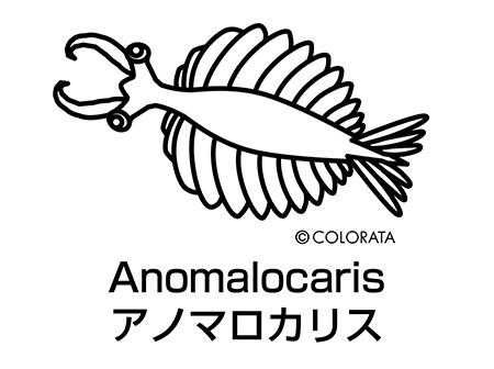 151005anomalocaris.jpg
