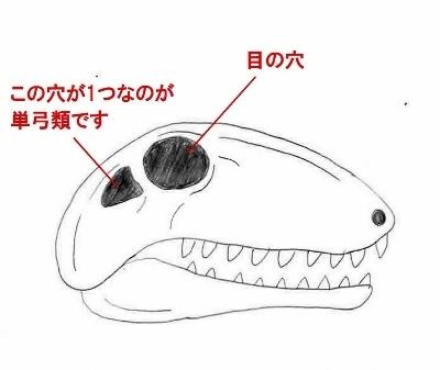 Skull-2 (400x337).jpg